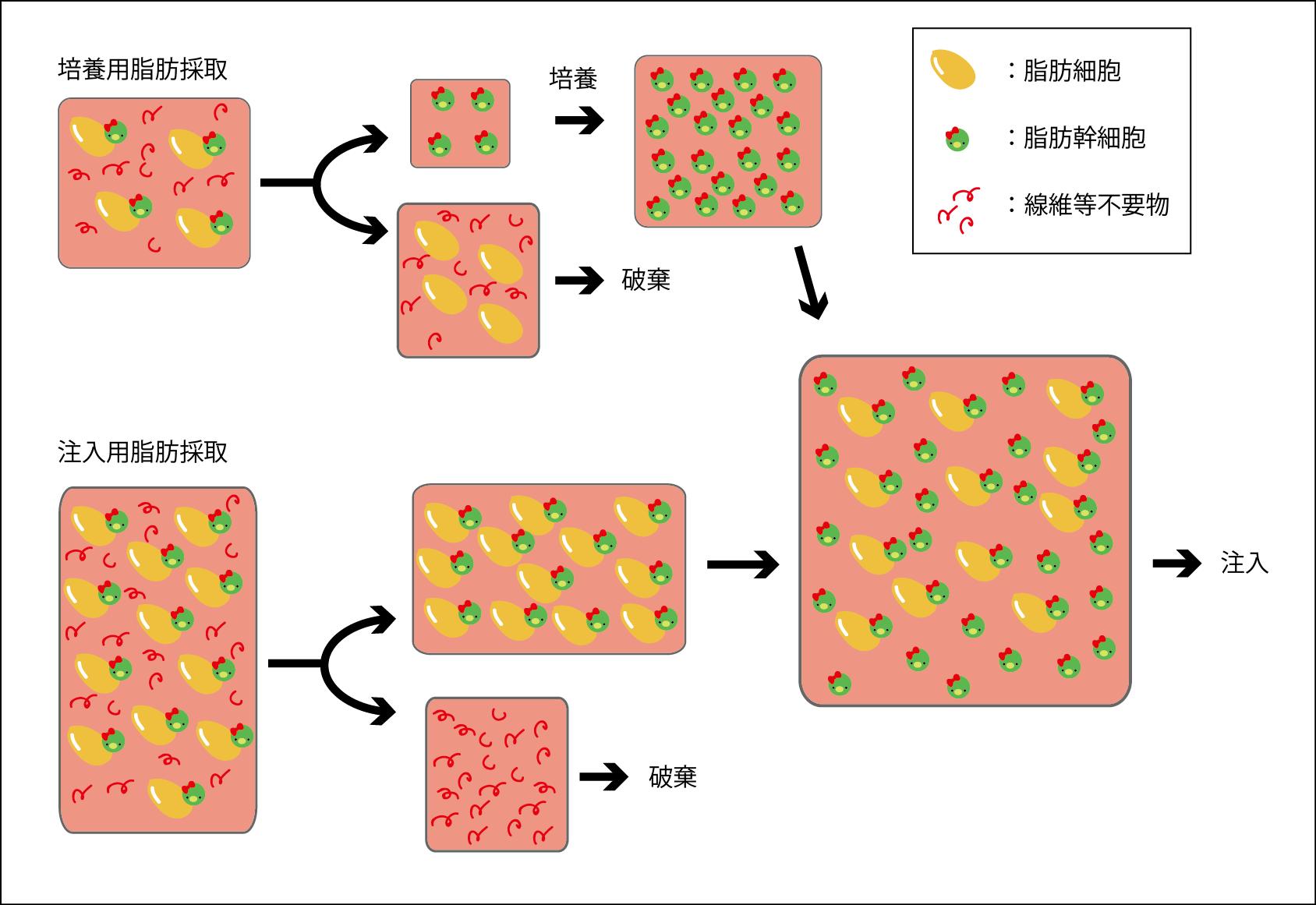 脂肪幹細胞培養法